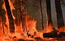 Cháy rừng tại Australia buộc hơn 100 trường học đóng cửa