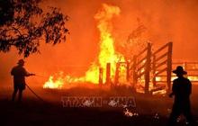 Australia: Cháy rừng hoành hành nghiêm trọng tại bang New South Wales