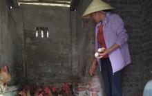 """Người phụ nữ bán trứng gà giúp những người cùng cảnh """"vì ngày mai tươi sáng"""""""