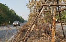 Nhiều cây xanh trên Quốc lộ 18 bất ngờ bị đốt cháy rụi