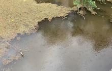 Hàng nghìn xác cá nổi lềnh phềnh sau khi mưa lớn cuốn tro bụi xuống sông ở Australia