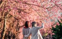 Nếu ngán ngẩm với cảnh tượng chen chúc check-in cùng mai anh đào ở Đà Lạt, bạn có thể chơi lớn sang Thái Lan ngắm rừng hoa đẹp như ngôn tình này