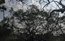 Pha chụp ảnh xấu không tưởng: Hào hứng nhờ chụp view đẹp, lớp học nhận cái kết đắng âm u như cô hồn đứng dưới bóng cây