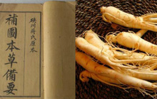 """Nhân sâm: Loài thực vật mà người phương Tây xem như """"cải thảo"""" nhưng lại là """"thần dược"""" của triều đình phong kiến Trung Quốc"""
