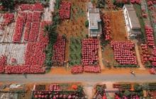 Đứng hình với loạt ảnh làng hoa Tết đẹp nhất miền Tây rực rỡ sắc màu từ trên cao, hoá ra lại nằm gần xịt Sài Gòn