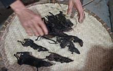 Độc đáo ngôi làng ở Hòa Bình người dân ăn Tết bằng thịt chuột