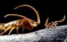 """Khoa học """"đập hộp"""" hang động tách biệt khỏi thế giới suốt 5 triệu năm, và đây là những gì được tìm thấy"""