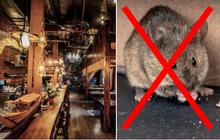 """Sốc nặng khi vừa ăn xong có con gì """"bò nhúc nhích"""" lên người, đến lúc hỏi thì nhân viên trả lời: Nhà hàng em nhiều chuột lắm!"""