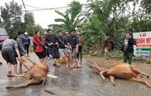 Mưa lũ tại Hà Tĩnh làm 6 người chết, hơn 45.500 hộ dân bị ngập