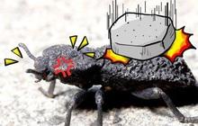 """Đây là loài bọ """"mình đồng da sắt"""" của thế giới tự nhiên, ô tô 1,6 tấn cán không chết"""