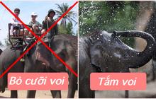"""HOT: Đắk Lắk từ bỏ loại hình cưỡi voi tàn nhẫn, thay vào đó du khách có thể tắm và nô đùa với """"các bé"""""""