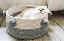 """Cẩm nang sắm đồ basic cho các """"sen"""" lần đầu nuôi mèo, đảm bảo """"boss"""" ưng hết cỡ"""