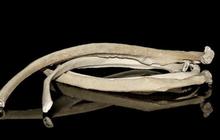 Xương sườn người thật là một trong những mặt hàng quái đản bán chạy nhất trên Amazon