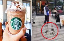 Starbucks tặng 1 ly nước free cho khách dắt theo thú cưng, có người mang cả cua biển tới để nhận quà