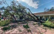 Trường học ở Bình Định tan hoang sau bão số 9, giáo viên vất vả dọn dẹp để chuẩn bị đón học sinh trở lại