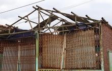 Lợi dụng bão để tăng giá ngói, tôn: Có thể bị phạt đến 20 triệu đồng
