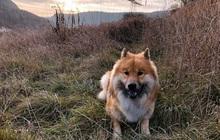 Làm thế nào chúng ta hiểu được biểu cảm của loài chó?