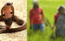 Bị rắn độc cắn, người đàn ông quay ra cắn lại vào tay vợ mình để cả hai cùng nhau đoàn tụ dưới suối vàng