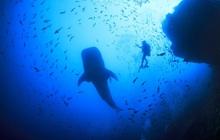 10 địa điểm lặn biển đẹp nhất thế giới vừa được tạp chí Forbes bình chọn, Việt Nam có 1 cái tên bất ngờ lọt vào danh sách này