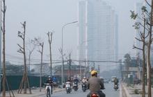 Hà Nội: Mới trồng chưa được 1 năm, hàng cây chết dọc tuyến đường mới mở bị chặt bỏ hàng loạt, chuẩn bị trở thành… củi khô
