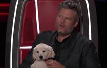 """The Voice US: Blake Shelton đưa một chú cún cực yêu ra """"đối đầu"""" với Nick Jonas"""