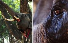 8 sự thật chứng minh các loài vật có thể giống con người đến mức đáng kinh ngạc, thậm chí còn giàu cảm xúc hơn chính chúng ta