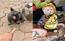 """Trước chó """"Nguyễn Văn Dúi"""" hút triệu like, những """"đại boss"""" này đã nổi như cồn: Đi tới đâu cũng được săn đón, có fan gửi quà mỗi tháng nữa cơ"""