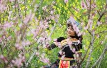 Giới trẻ phát cuồng vì mùa xuân Fansipan đẹp thần sầu