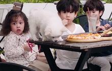 Cam, Xoài, Đậu ngơ ngác khi để cún con làm vỡ cốc nước, ăn cả bánh pizza của cả 3
