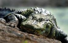 """Khi cầu thủ mê tín, từ vô hại như """"tè bậy"""" đến chết người do tắm trên dòng sông đầy cá sấu để tẩy rửa những linh hồn xấu"""