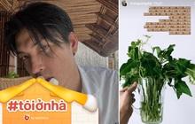 Quang Đại share mẹo bảo quản rau xanh vừa học được trên mạng: test thử thấy rau tươi lâu hơn mà lại còn để được từ 3 - 5 ngày