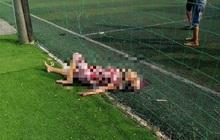 Tây Ninh: Nghi án cháu tâm thần dùng dao chém chết bà ngoại vì tưởng cây chuối