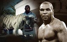 Thú chơi ngông thích nuôi hổ của Mike Tyson và giai thoại mất oan 6 tỷ đồng vì để vật nuôi ăn thịt người