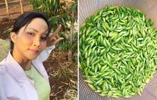 Gái xinh khoe một đặc sản quê nhà khiến dân mạng sợ nổi da gà, Hoa hậu H'hen Niê cũng đã từng giới thiệu món này trước đây