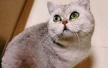 """Cô mèo sống sót sau 40 ngày """"mang nặng đẻ đau"""" trong căn hộ không người vì cả nhà đi điều trị COVID-19"""