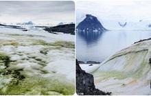 Nam Cực tuyết trắng bỗng nhiên bị phủ xanh, nhưng lý do lần này không hẳn đã thuộc về con người