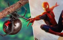 Bolivia: mơ trở thành Người Nhện, ba anh em ruột nhập viện vì bắt loài nhện cực độc cắn mình