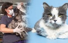 Bị bao phủ bởi 1kg lông rậm rạp, mèo hoang khiến nhiều người mới gặp phải bối rối vì không biết là con gì