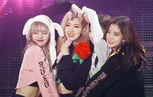 Không thèm chốt ngày comeback, YG bỗng nhiên nói về kế hoạch solo của BLACKPINK: Rosé sẽ có album ra tháng 9, Lisa và Jisoo đang chuẩn bị?