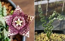Những loài hoa hình thù kì dị khiến ai xem xong cũng không dám tin, một mực khăng khăng đây là sản phẩm của photoshop