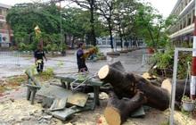 Đồng Nai: Cây phượng bật gốc đè trúng, 3 học sinh lớp 8 bị thương