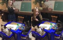 Quá muốn làm cô giáo, bé gái lôi hẳn hai chú mèo ra dạy học, thái độ của boss gây chú ý