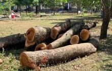 Kiểm điểm trường cấp 3 ở Nghệ An chặt cây hơn 40 năm tuổi