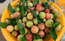 """Giá mận Nhật lên tới 213k/kg nhưng người Việt ở Nhật vẫn """"cắn răng"""" mua ăn cho đỡ nhớ món quả đặc sản quê nhà"""