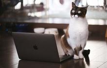 Bị sếp bắt họp online lâu hơn thường lệ, thanh niên tưởng có biến nhưng lý do thật sự đằng sau lại vô cùng đáng yêu