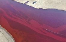 Dòng sông Bắc Cực bỗng nhuộm màu đỏ rực như máu, và lý do đằng sau sẽ khiến bạn cảm thấy đau lòng