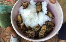 Trẻ em vùng sâu ăn cơm nguội với ve sầu: Đói ăn hay tập quán?
