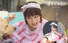 """Netizen xôn xao vì ảnh """"cưa sừng làm nghé"""" của Dương Tử quá giống Đồng Niên ở Cá Mực Hầm Mật"""