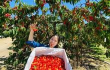 Cặp vợ Việt chồng Mỹ kể lại hành trình tự lái xe đi du lịch khám phá khắp núi rừng nước Mỹ, vào vườn trái cây đẹp như trên phim trong chuỗi ngày tránh dịch Covid-19