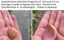 Quả vải quen mặt với bao người mà người nước ngoài nhìn thấy vỏ vải lại tưởng vỏ... trứng của một loài nào đó
